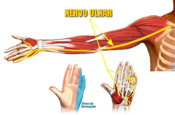 nervo digital ulnar